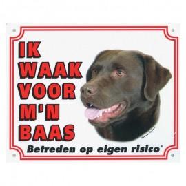Labrador Bruin